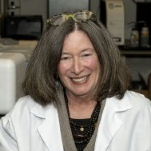 Profile picture for Barbara D. Boyan, Ph.D.