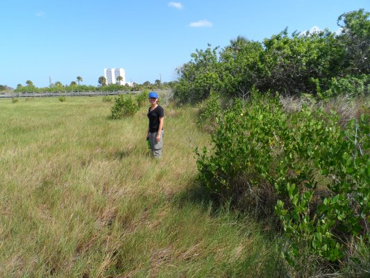 Villanova mangrove expansion and climatic warming