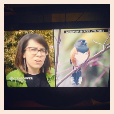 Talking about Vancouver's City Bird election on CBC Vancouver